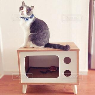 猫,動物,屋内,レトロ,癒し,ハウス,テレビ,cat,ブリティッシュショートヘア,猫の家具