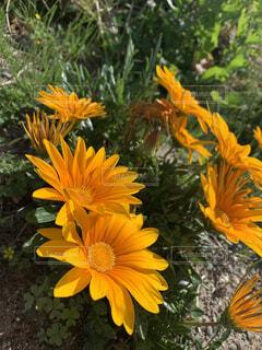 花,夏,黄色,オレンジ,笑顔,カラー,草木,フローラ