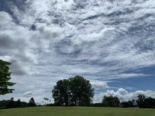自然,風景,空,夏,屋外,雲,景色,草,樹木,新緑,草木,日中