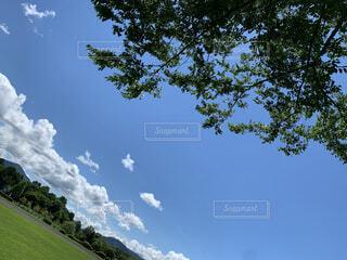 自然,空,夏,木,芝生,屋外,緑,雲,青空,青い空,丘,樹木,新緑,草木,日中,山腹