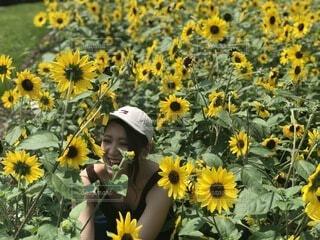 花,夏,屋外,緑,ひまわり,黄色,景色,お花,満開,笑顔,可愛い,夏休み,summer,楽しみ,草木,sunflower