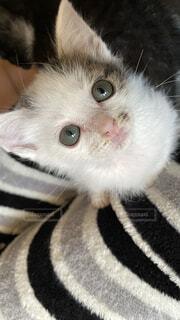 猫,動物,子猫,目