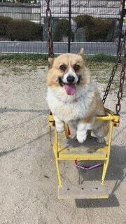 犬,公園,乗り物,動物,屋外,かわいい,黄色,ブランコ,オシャレ,お座り,可愛い,地面,お洒落,ゆらゆら,おしゃれ