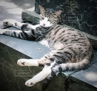 猫,動物,屋外,景色,寝転ぶ,お寺