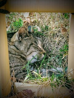 猫,動物,景色,額縁,お昼寝,草木,ネコ科