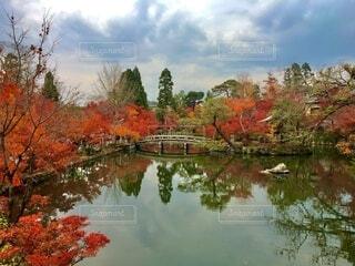 紅葉と池の写真・画像素材[4816937]