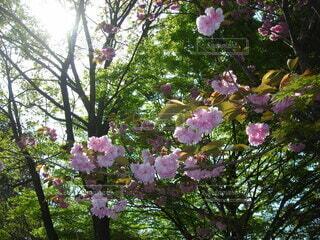 花,屋外,樹木,草木,ガーデン,ブルーム,ブロッサム,フローラ