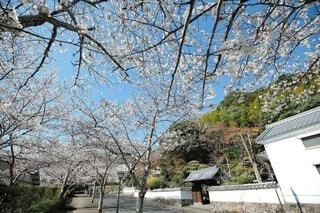 空,花,春,桜,屋外,家,樹木,城下町