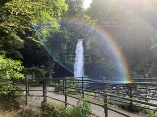 自然,風景,緑,水,虹,川,反射,滝,光,マイナスイオン,空気,草木,酸素