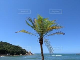 自然,空,屋外,ビーチ,水面,海岸,樹木,ヤシの木,パーム