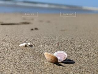自然,海,動物,屋外,ビーチ,水面,貝,地面,カタツムリ,ハマグリ,小石,二枚貝,軟体動物,コックル