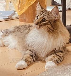 猫,動物,屋内,景色,座る