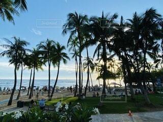 空,屋外,ビーチ,雲,水面,海岸,草,樹木,ヤシの木,ハワイ,バカンス,リゾート,草木,パーム