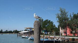自然,絶景,街並み,鳥,緑,白,青空,島,青,海辺,カモメ,イタリア,ライフスタイル,ブラーノ島
