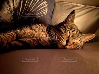 猫,動物,屋内,睡眠,ベッド