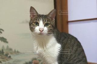カメラ目線のネコの写真・画像素材[4851976]