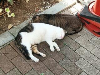 2匹の野良猫の写真・画像素材[4873057]