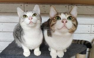 見上げる2匹の猫の写真・画像素材[4882631]