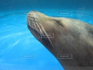 気持ち良く泳ぐの写真・画像素材[4807688]