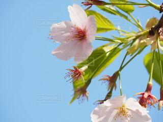 空,花,春,草木,ブルーム,ブロッサム,フローラ