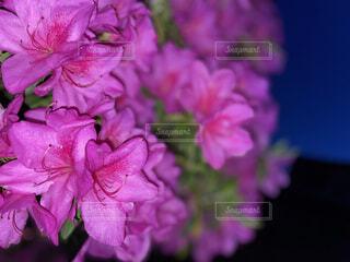 風景,花,ピンク,草木,ブルーム,フローラ