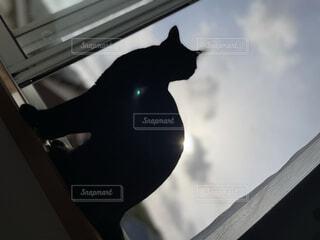 猫,風景,空,動物,黒