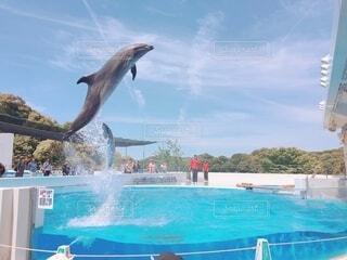 空,動物,屋外,イルカ,青,水面,泳ぐ,海獣,クジラ,スイミング プール