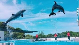 空,動物,屋外,イルカ,水面,泳ぐ,海獣,スイミング プール