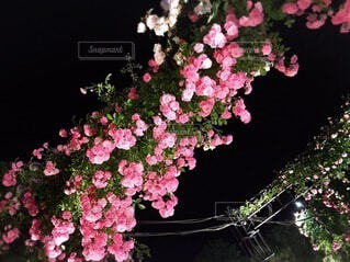 花,薔薇,樹木,ハウステンボス,草木