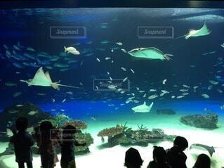魚,水族館,水面,葉,泳ぐ,人物,人,容器,海獣,海洋生物学