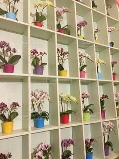 花,花瓶,植木鉢,棚,本棚,観葉植物