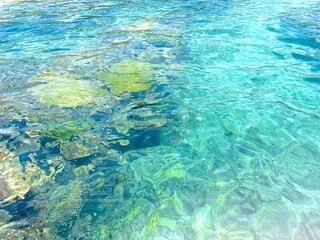 海,水面,葉,泳ぐ