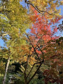 公園,秋,紅葉,屋外,葉,樹木,草木