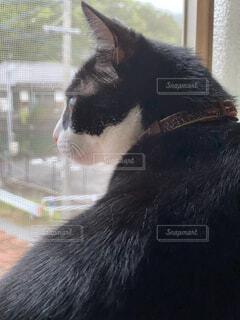 猫,動物,屋内,白,黒,窓