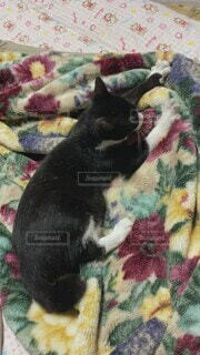 猫,動物,屋内,かわいい,子猫,オシャレ,可愛い,お洒落,おしゃれ,ベッド