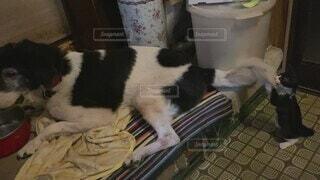 犬,猫,動物,屋内,かわいい,黒,子猫,オシャレ,可愛い,お洒落,おしゃれ