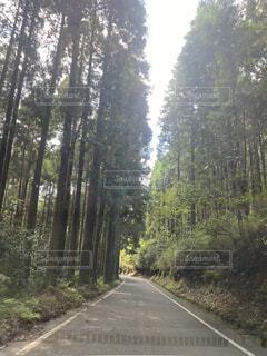 風景,空,森林,屋外,道路,景色,樹木,道,車窓,ドライブ,秋空,草木