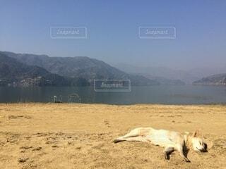 空,動物,屋外,湖,ビーチ,水面,山,景色