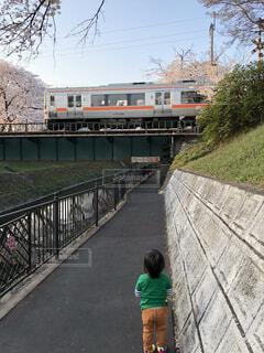 桜,電車,人物,人,鉄道,息子,レール,パーソン