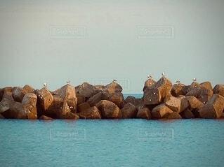 海の消波ブロックにとまる沢山のカモメの写真・画像素材[4840935]