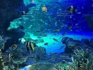 水槽の中の沢山の魚とサンゴの写真・画像素材[4841047]