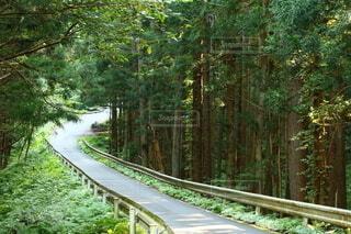 自然,公園,森林,木,屋外,緑,道路,景色,樹木,新緑,木立,草木,緑園