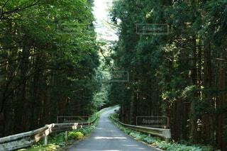 自然,公園,森林,木,屋外,緑,道路,景色,樹木,道,新緑,木立,緑園,パス