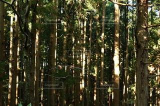 自然,風景,森林,木,屋外,緑,景色,樹木,新緑,木立,杉,草木,緑園