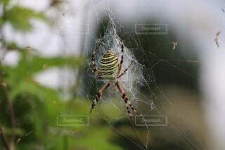 動物,屋外,クモの巣,クモ,昆虫,生き物,蜘蛛,生体