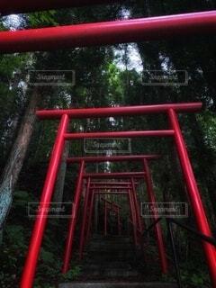 屋外,森,緑,神社,赤,鳥居,樹木,門,神秘的,外観,冷たい,遊び場,稲荷,神,神様,深緑
