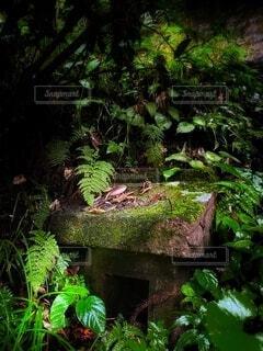 自然,風景,森,緑,神社,景色,苔,岩,石,深緑