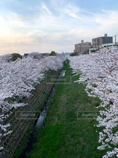 空,花,屋外,草,丘