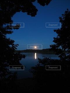 木の隙間から月の写真・画像素材[4839143]