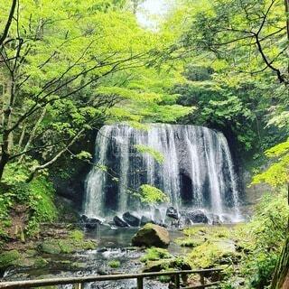自然,森林,屋外,川,水面,滝,樹木
